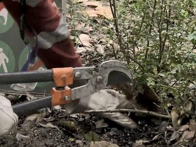 Lavori di Pubblica Utilità Incontro tra Sergio Mattarella e i detenuti-giardinieri impegnati nella pulizia dei Giardini del Quirinale