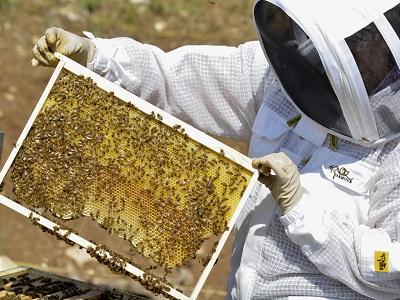 apicoltore istituto penitenziario